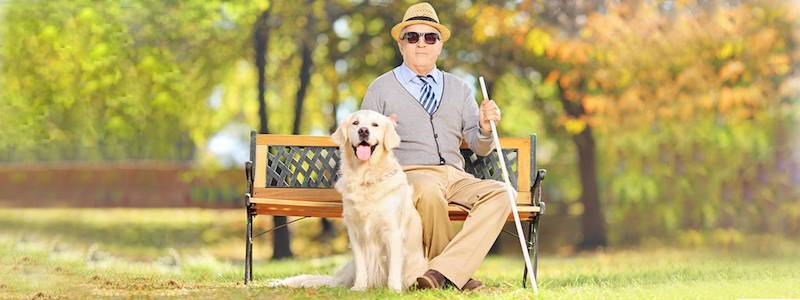 man wearing sunglasses sitting on bench next to dog 800X300